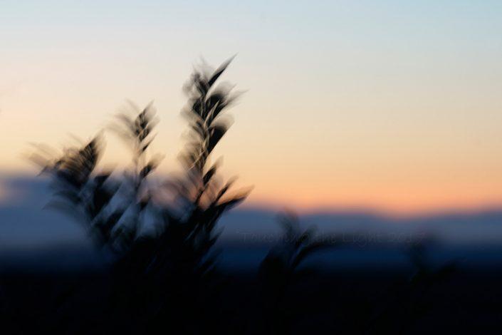 Dawn blur, Beal